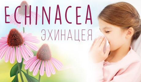 Эхинацея для иммунитета для детей и взрослых. Эхинацея в таблетках: инструкция по применению