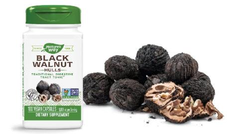 Черный орех от паразитов, грибка и другие полезные свойства. Применение черного ореха