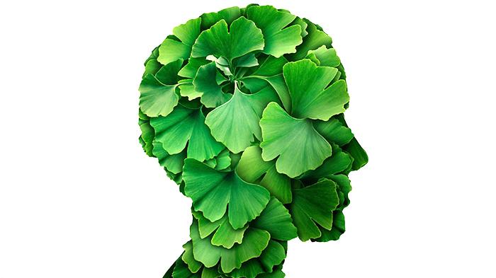 Польза гинкго для мозга и памяти